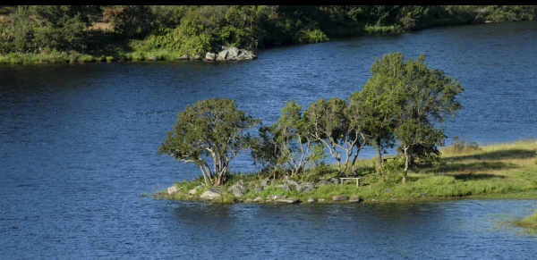 Proyecto Bosques de la Laguna de Inmobiliaria Gestión El Álamo-8