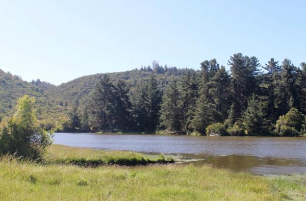 Proyecto Bosques de la Laguna de Inmobiliaria Gestión El Álamo-9