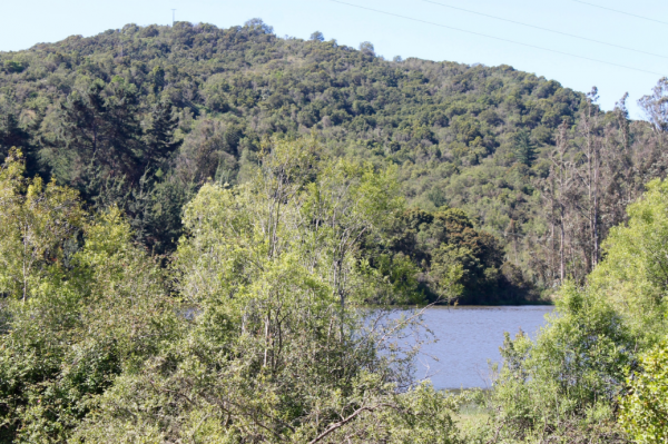 Proyecto Bosques de la Laguna de Inmobiliaria Gestión El Álamo-10