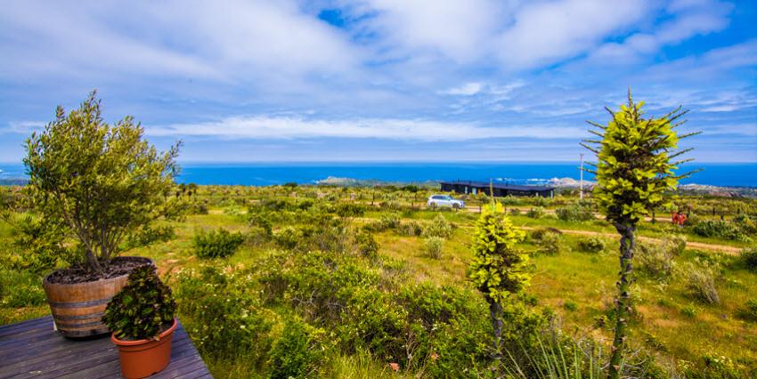 Proyecto Condominio Rocas del Mar - Sitios de Inmobiliaria Foresta del Mar-9