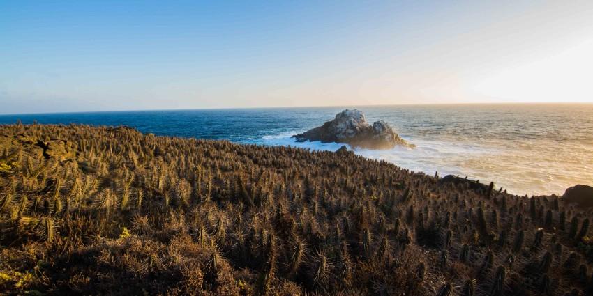 Proyecto Condominio Rocas del Mar - Sitios de Inmobiliaria Foresta del Mar-5