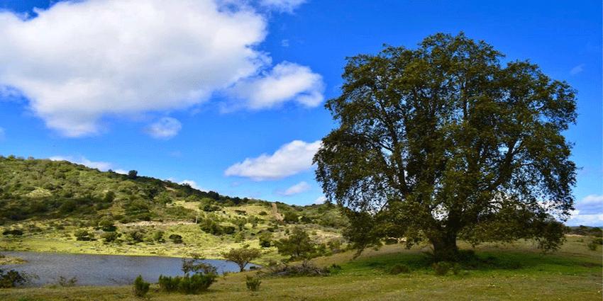 Proyecto Bosques de la Laguna de Inmobiliaria Gestión El Álamo-3